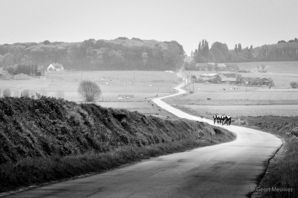 a herd of cyclists